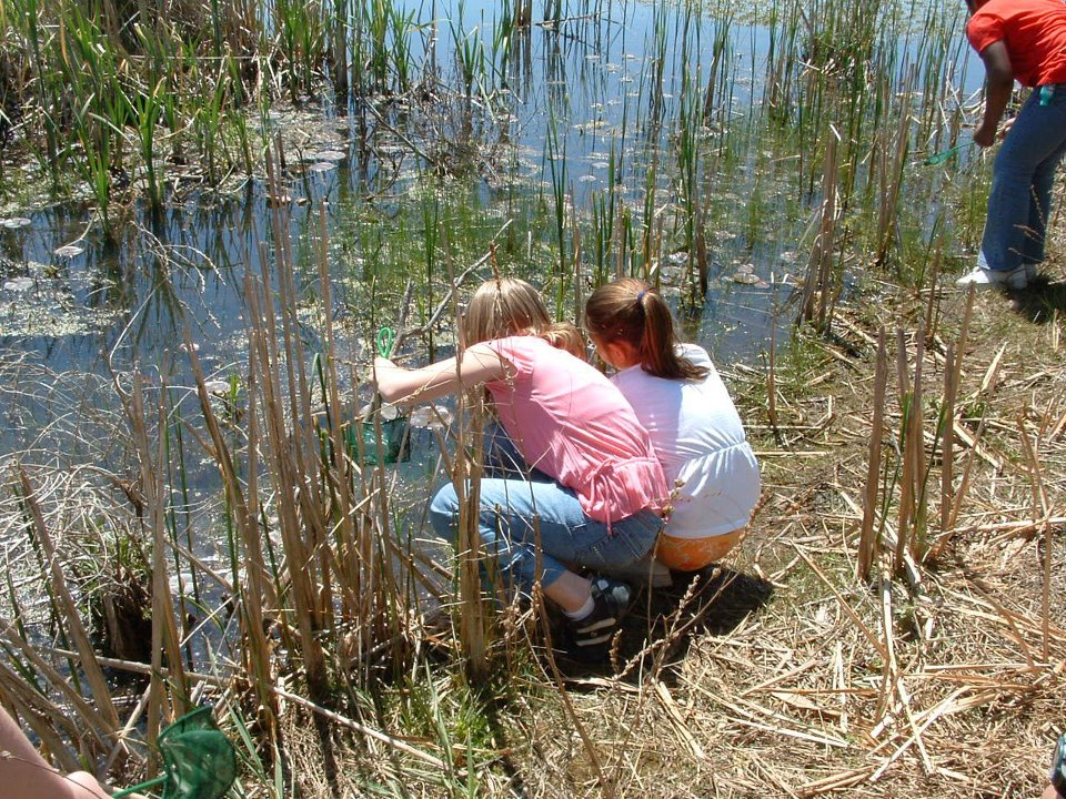 Kids learn about wetlands at Talahi's tamarack bog.